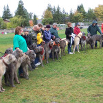 Our irish Wolf Hound meetup. One of many meetups we have in our park.