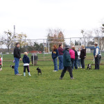 Our Boston Terrier meetup. One of many meetups we have in our park.