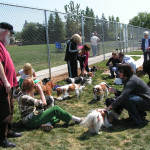 Our Cavalier King Charles Spaniel meetup. One of many meetups we have in our park.