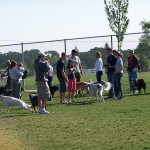 Our Folsom Australian Shepherd meetup. One of many meetups we have in our park.