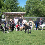Our Great Dane meetup. One of many meetups we have in our park.
