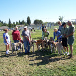 Our Greyhounds meetup. One of many meetups we have in our park.