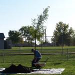 Tree Project 08