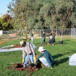 Tree Project 10