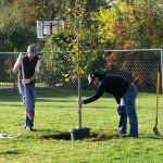 Tree Project 12