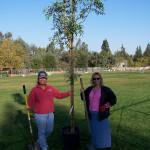 Tree Project 13