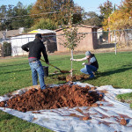 Tree Project 15
