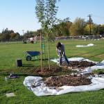 Tree Project 19