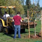Tree Project 20