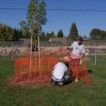 Tree Project 23